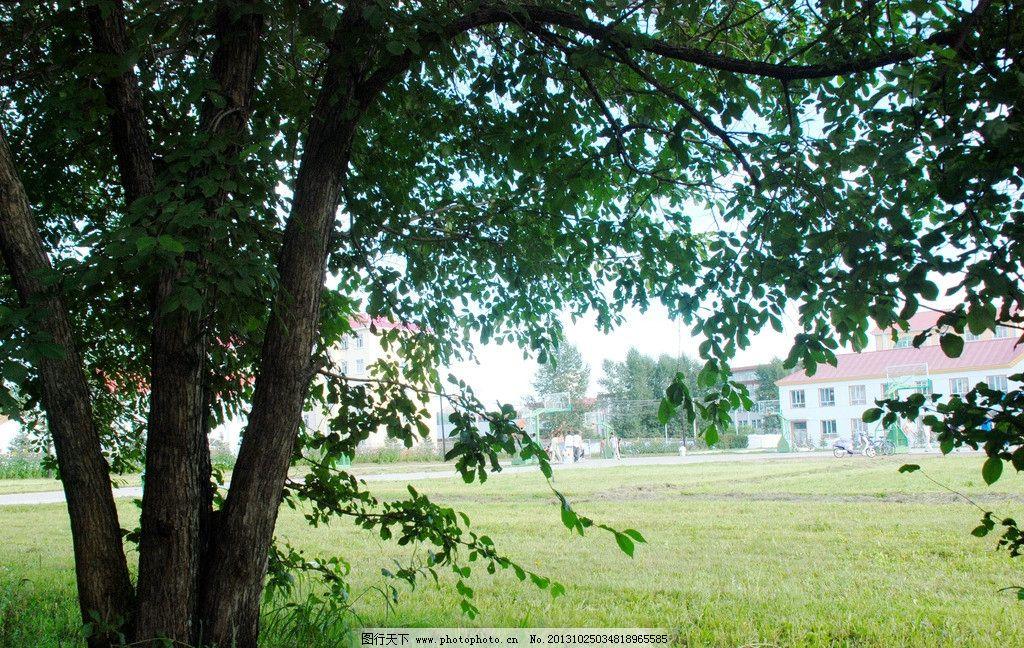夏日校园树林 根河市第一中学 中学 夏天 树木 草地 南教学楼 自然图片