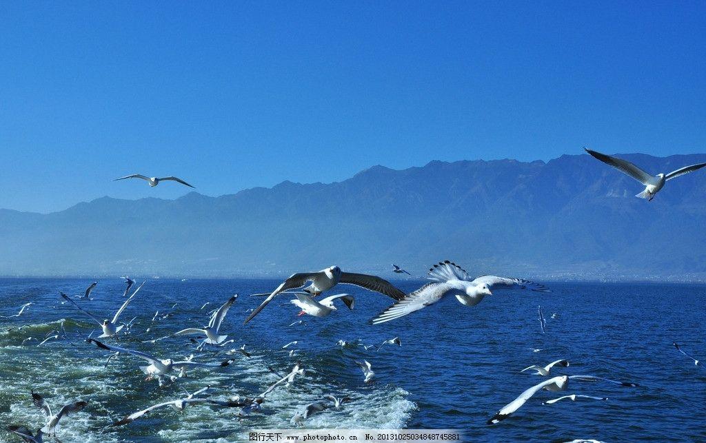 海鸟 鸟 飞鸟 小鸟 风景壁纸 壁纸 自然景观 动物壁纸 自然风景 飞