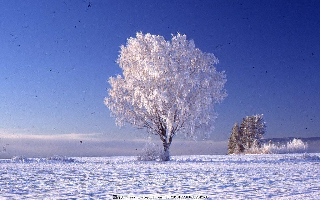 雪��/~���x+�x�&�7:d��_冬天 雪树图片