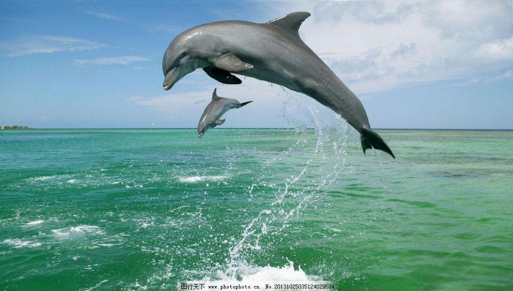 摄影图库 生物世界 海洋生物  海豚 飞跃 跃出海面 特写 海 浪花 蓝天