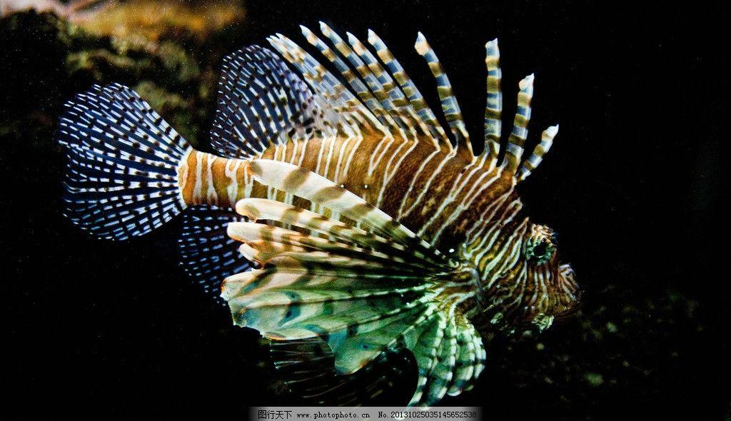 海底 鱼图片