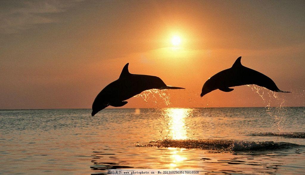 唯美手绘海豚环绕壁纸