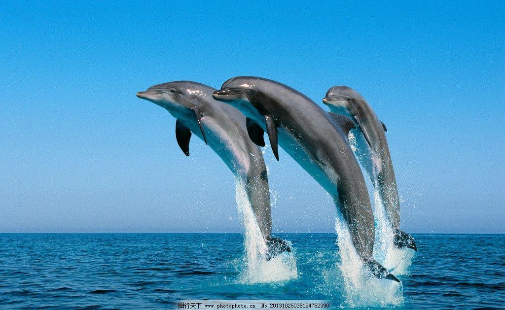 动物画海豚好看