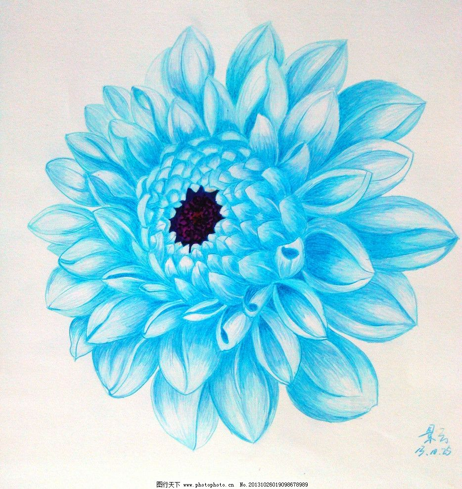 彩铅画素描花的具体步骤
