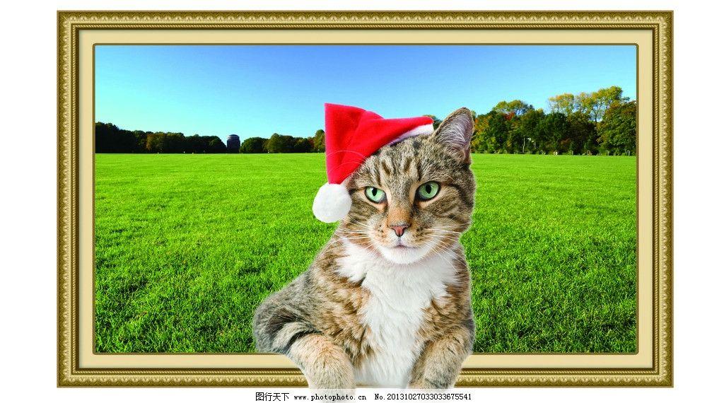 小猫 自然画 猫 相框 草地 大草原 合成图 壁画 风景素材 psd分层素材