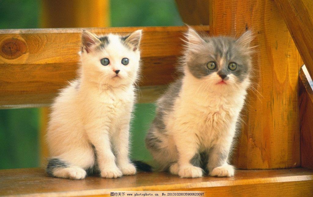 宠物猫图片素材下载 小狗 宠物猫 猫 小猫 猫咪 小花猫 小懒猫 猫咪