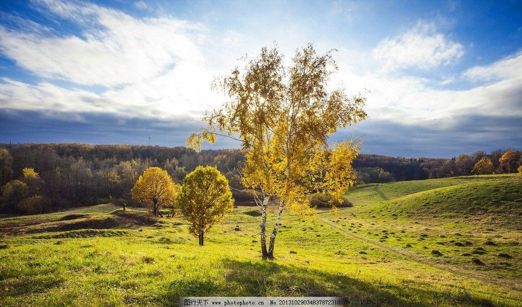 蓝天草地 大树 树林 树木 自然景观 自然 大自然 美景 自然风景 树木