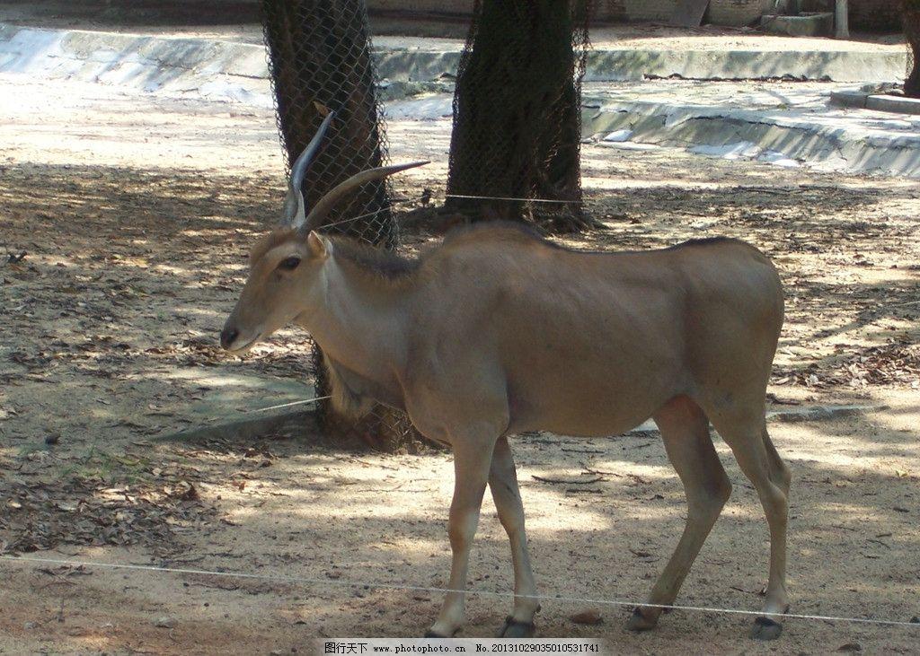 羚羊 动物园 漂亮 休息 大树 野生动物 生物世界 摄影