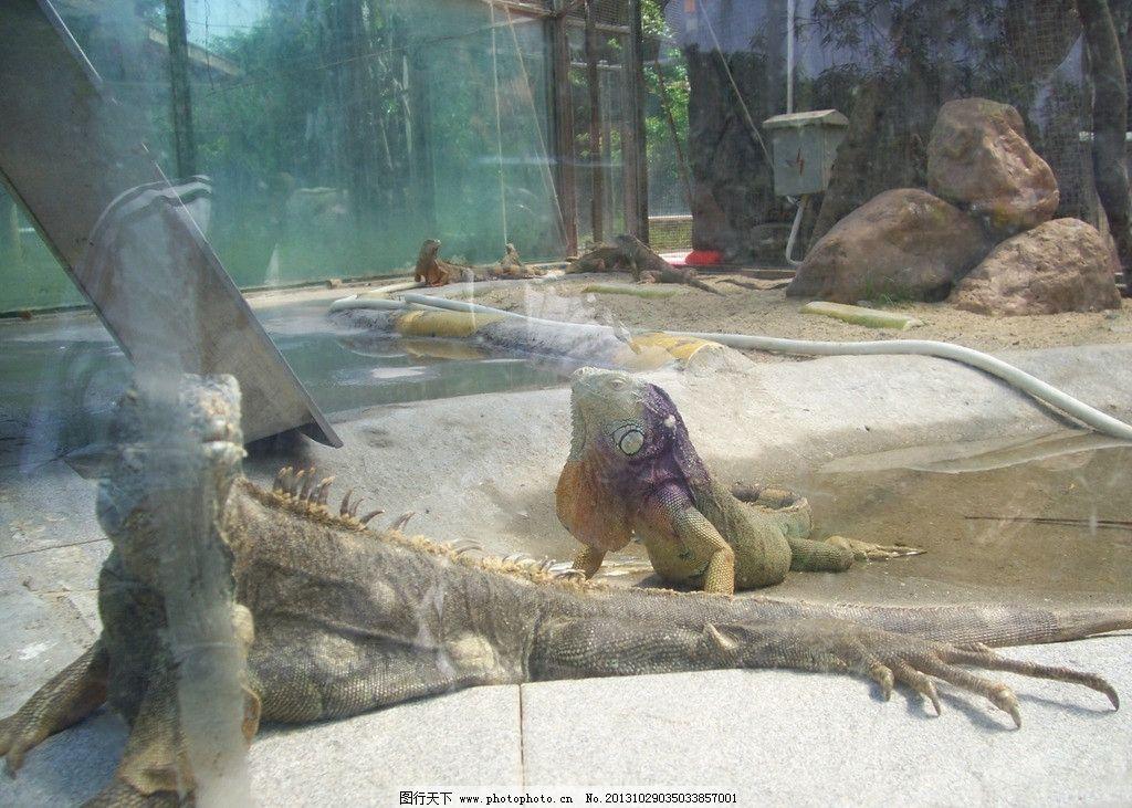 蜥蜴 爬行 动物园 休息 冷血 爬虫 野生动物 生物世界 摄影