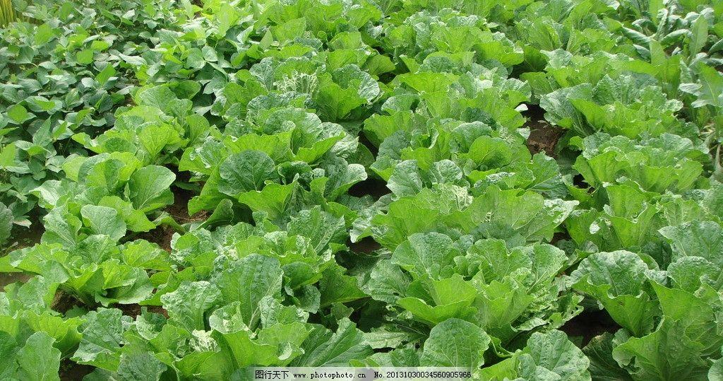 种植蔬菜 的步骤