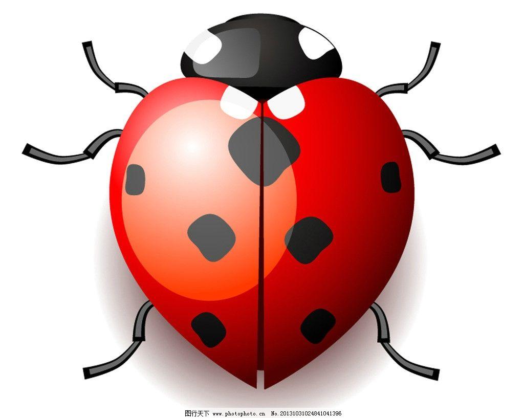 七星瓢虫 昆虫 小虫子 红色 小动物 生物世界 设计 72dpi jpg