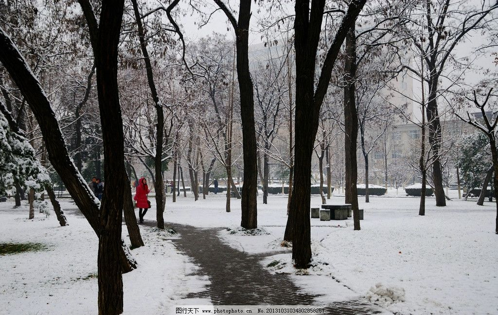 校园雪景 冬天 树林 树木 青色树干 白雪 小路 路人 石桌石凳 高楼