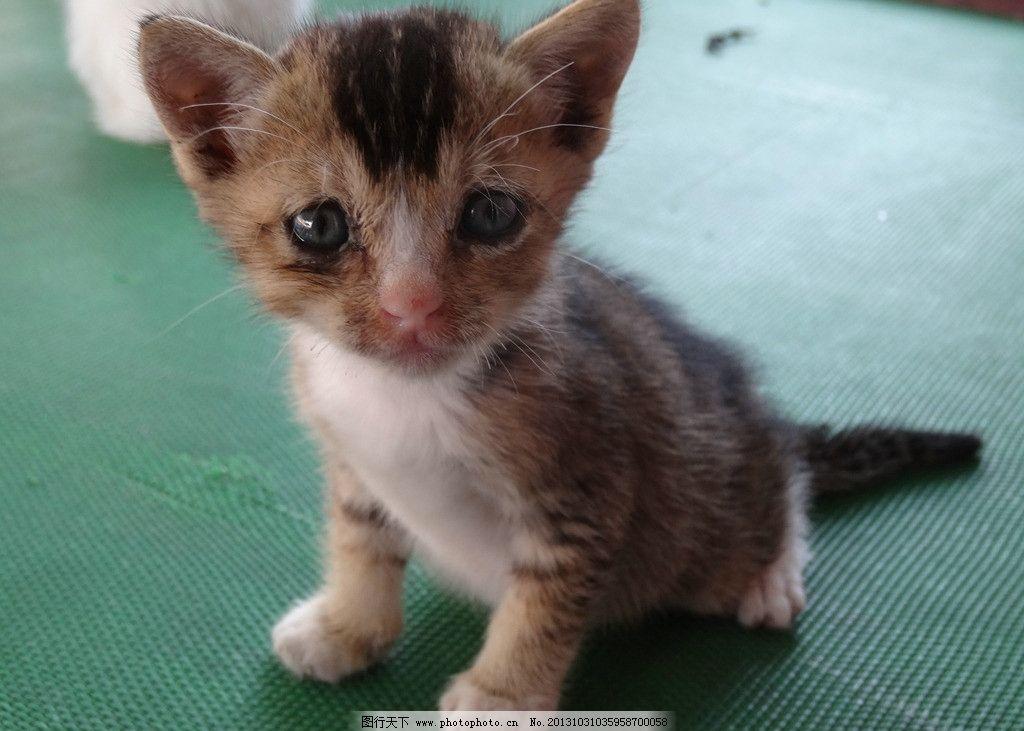 可爱小猫摄影图片