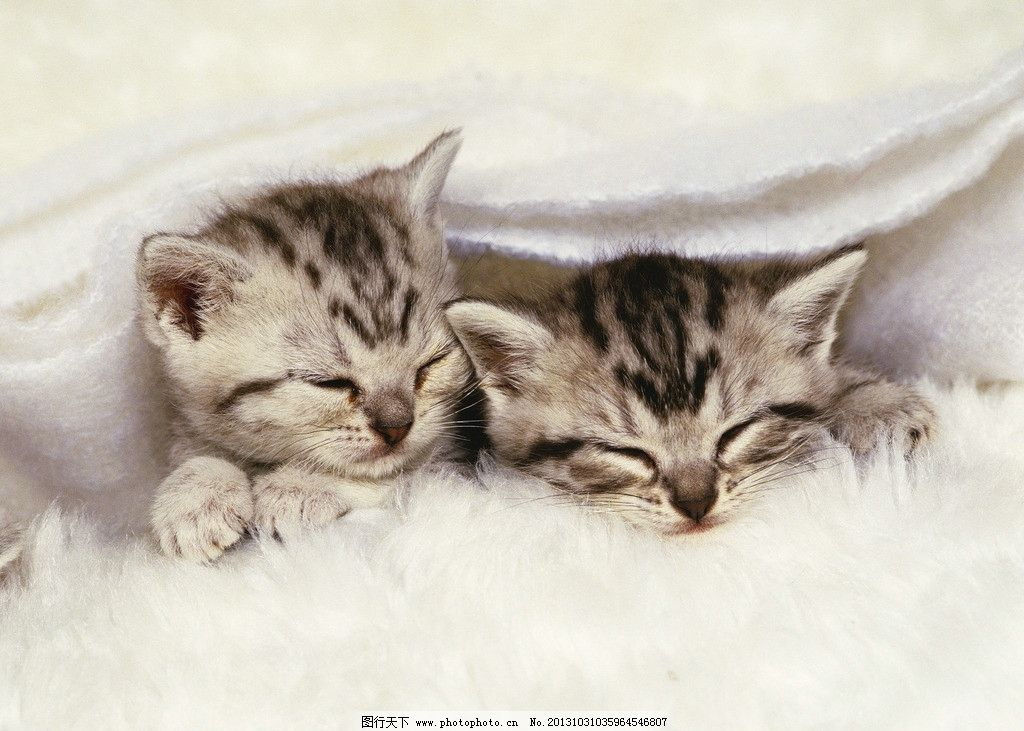 壁纸 动物 猫 猫咪 小猫 桌面 1024_731