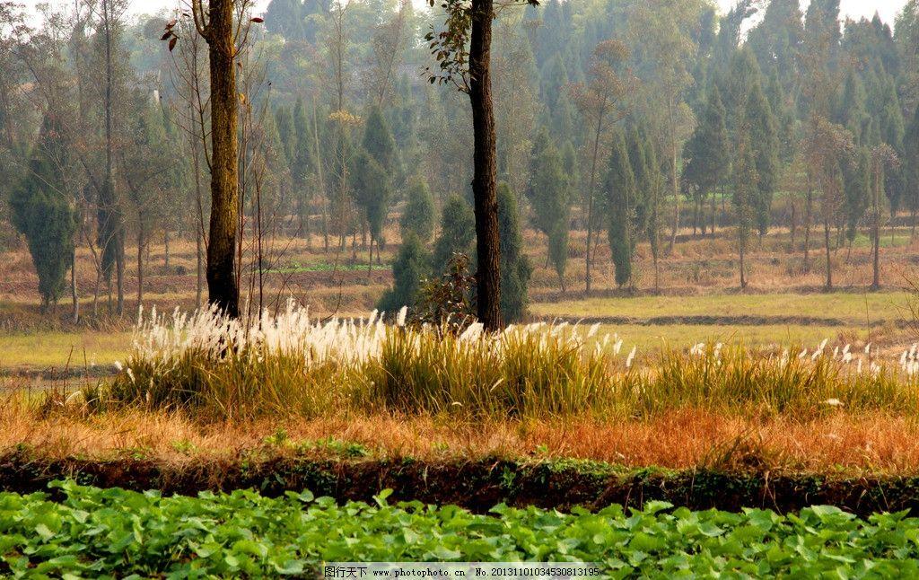 田园风光 乡村 村庄 农田 树木 草地 山坡 水田 自然景观 摄影 72dpi