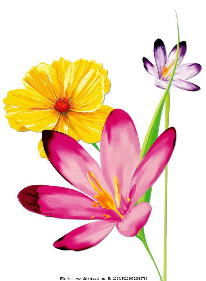 花朵 鲜花 花 手捧花 捧花 花卉 花朵组合 花艺 盛开 各种花 绽放