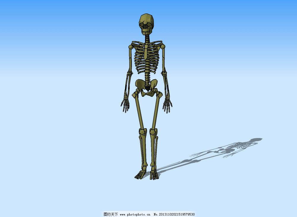 骨骼3d模型 人体 骨架 三维 立体 造型 精模 其他模型 源文件