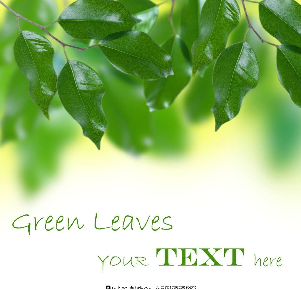 绿叶背景 绿色植物 树叶 叶子 背景底纹 底纹边框