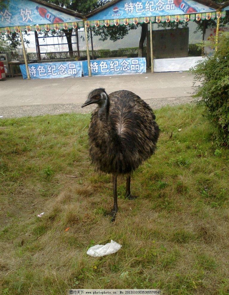 手机拍摄的动物园图片