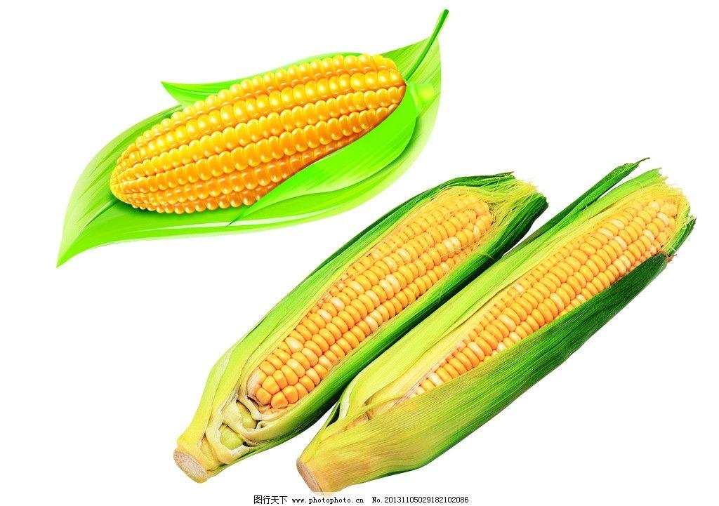 玉米 玉米棒子 带叶玉米 嫩玉米 嫩叶 卡通 包装设计 广告设计模板