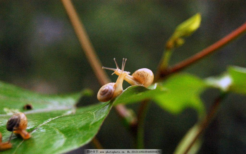 蜗牛 爬行动物 昆虫 绿叶 生物世界 摄影 300dpi jpg