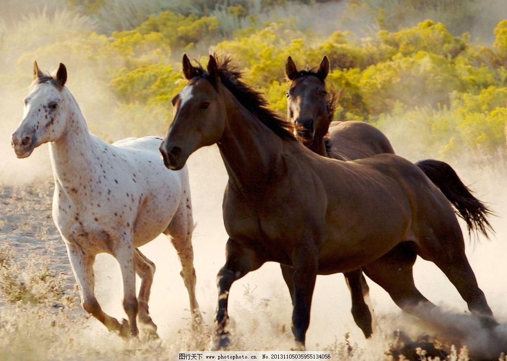 骏马 骏马图片素材 马匹 奔跑的骏马 马 白马 动物 生物 生物世界