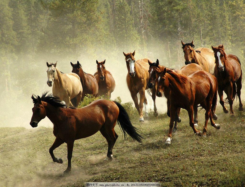 动物奔跑图片大全