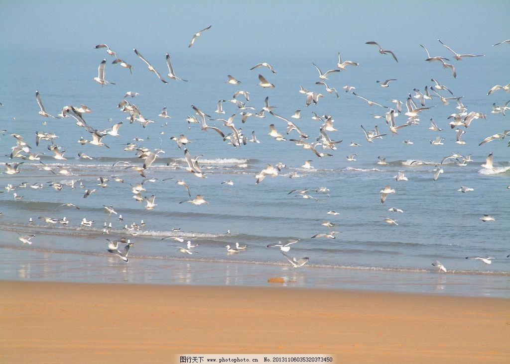 海鸥 海鸥图片素材下载 大海 沙滩 旅游 冬天 旅游摄影 威海 鸟类