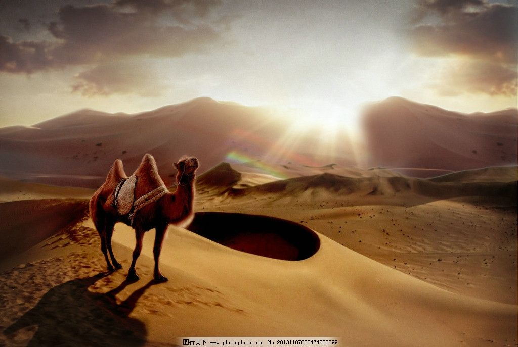 沙漠中骆驼 骆驼 沙漠 沙漠动物 搬运动物 其他 生物世界 设计 300dpi