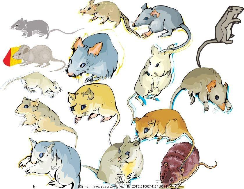 动物世界 松鼠 鼠 老鼠 动物家族 素描 动物 陆地动物 生物世界 各种