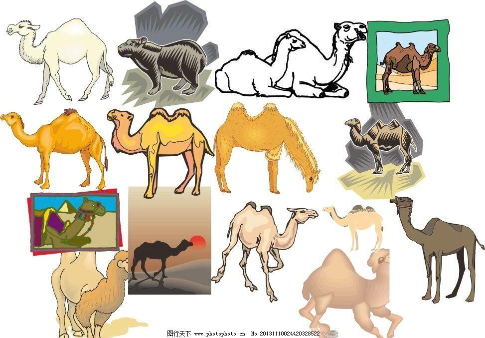 动物世界图片_野生动物_生物世界_图行天下图库
