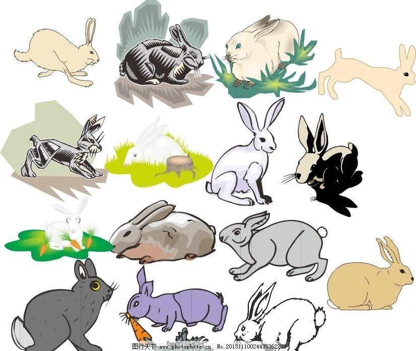 动物世界 兔子 小白兔