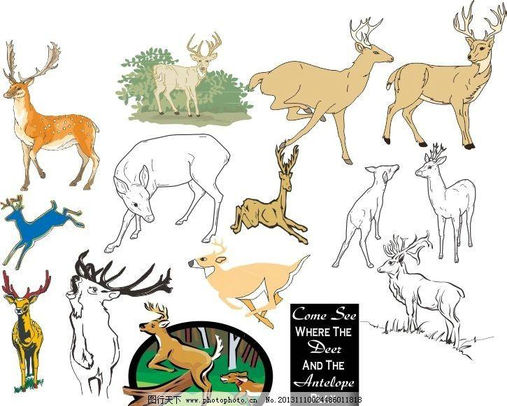 各种动物模板下载 各种动物 素描图 广告设计 矢量 cdr 线条 海洋动物