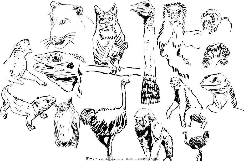 鸵鸟 猴子 猫头鹰 豹 蜥蜴 各种动物模板下载 各种动物 素描图 广告