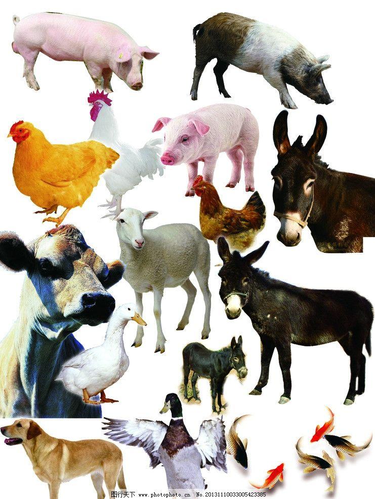 超萌超可爱动物萌图片猪