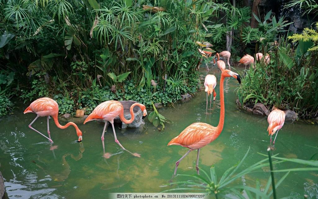 火烈鸟 公园 动物世界 山水 自然景观 摄影