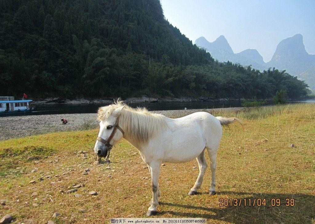 白马 马 河 青草 绿水 野生动物 生物世界 摄影 180dpi jpg