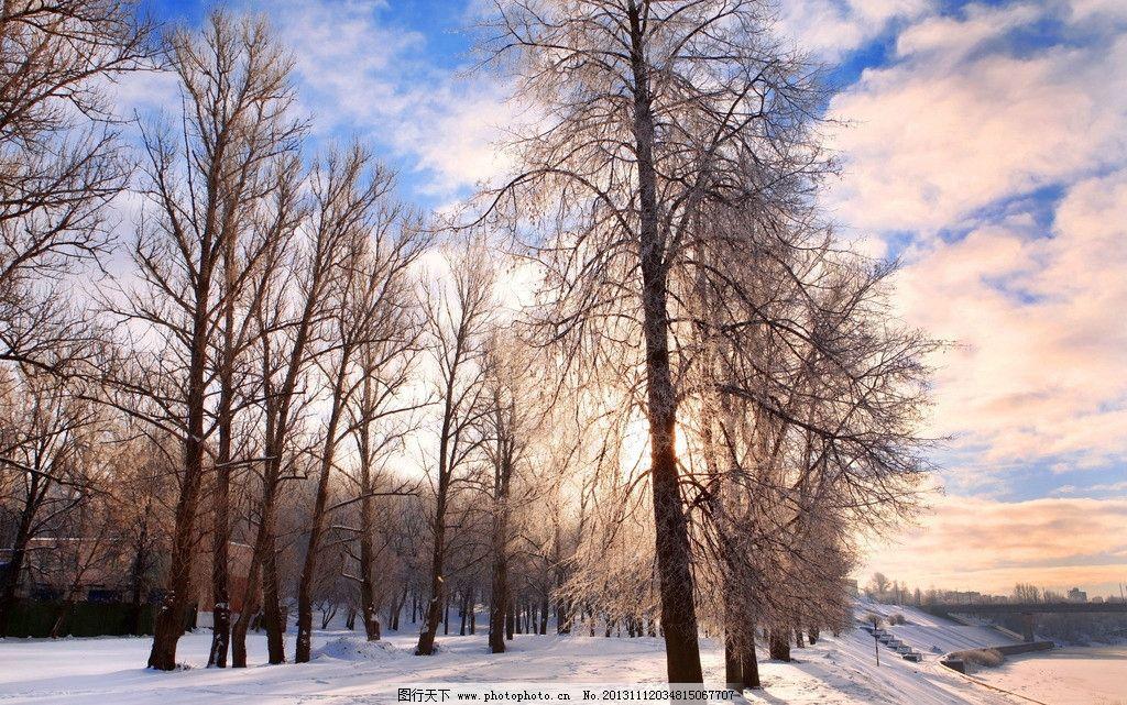 树林 冬天 雪景 雪花 雪 下雪 大树 树木 自然景观 自然 大自然 自然