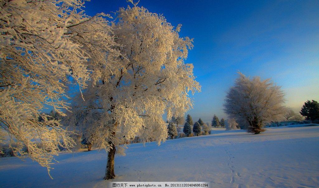 雪景 冬天 雪花 下雪 雪 天空 树林 大树 自然景观 自然风景 自然风光