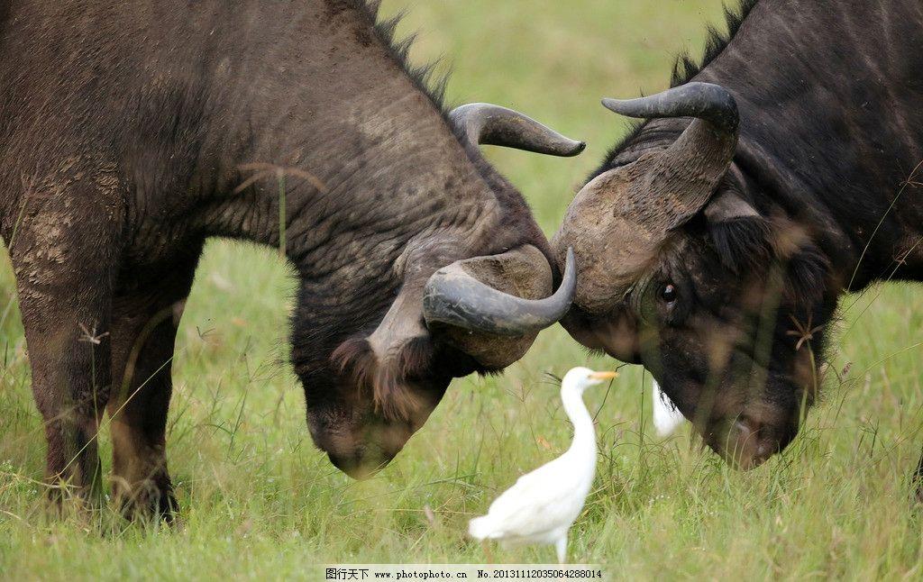 高清非洲野生动物图片