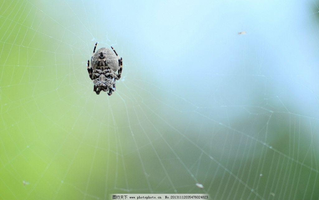 蜘蛛 蛛型纲 动物 节肢动物 生物 摄影