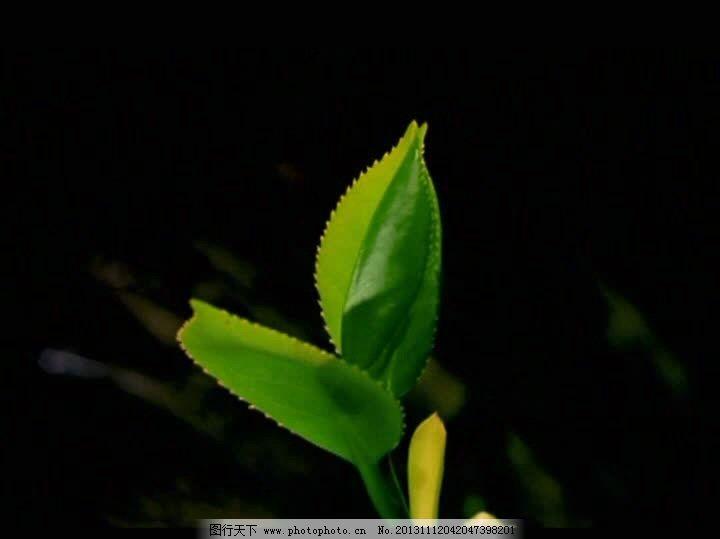 生长视频素材 植物视频素材 植物背景视频素材 公园场景视频素材 树木
