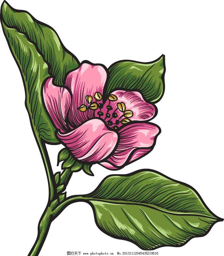 海棠花 手绘 矢量 花 素材