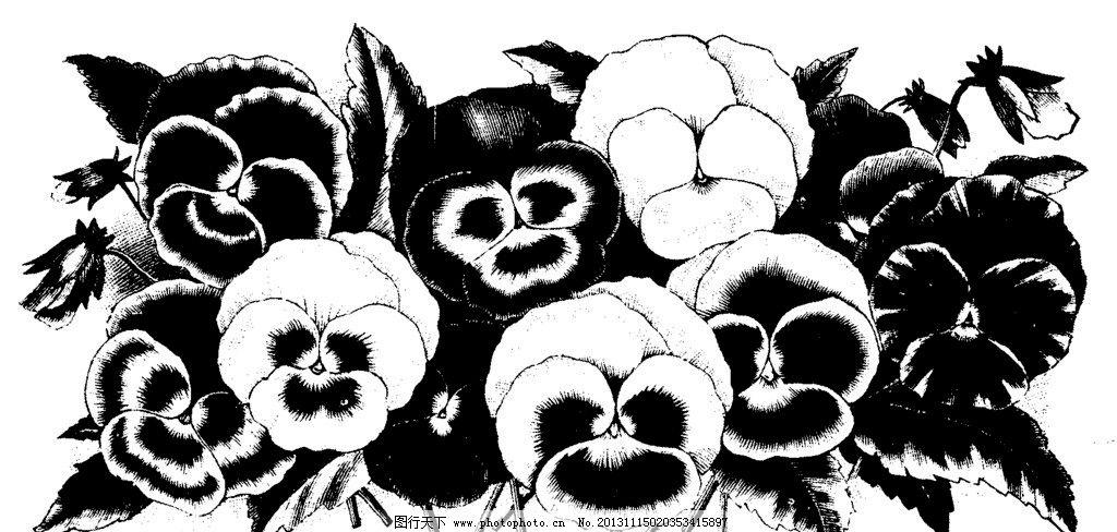 黑白花卉 玫瑰花 蝴蝶兰 花边花纹 底纹边框
