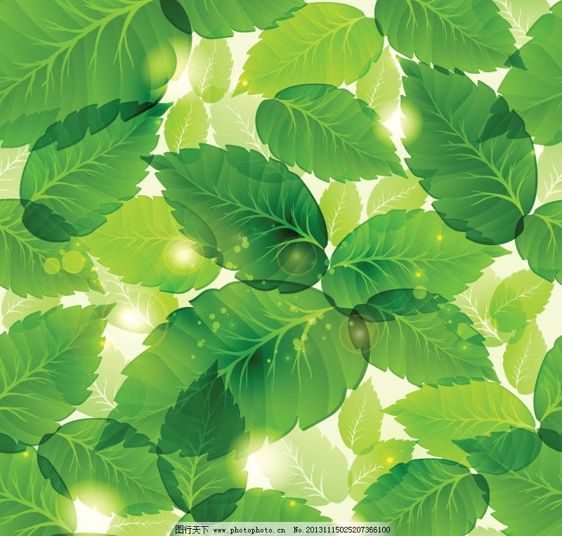 绿叶 绿叶背景 树叶 树叶图案 树叶纹理 绿色树叶 树叶边框 树木树叶