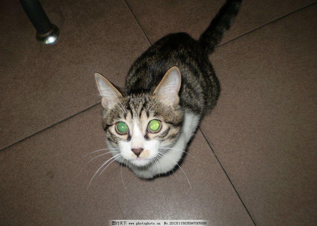 猫咪 黑白 眼睛 可爱 超萌 家禽家畜 生物世界 摄影 314dpi jpg