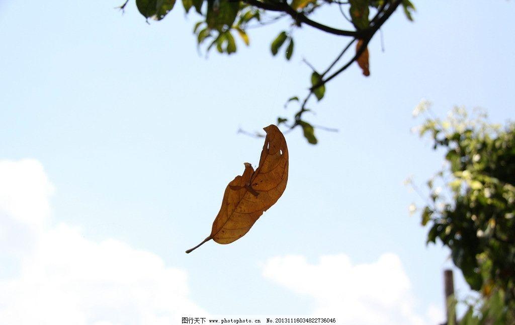 秋天有哪些植物和动物