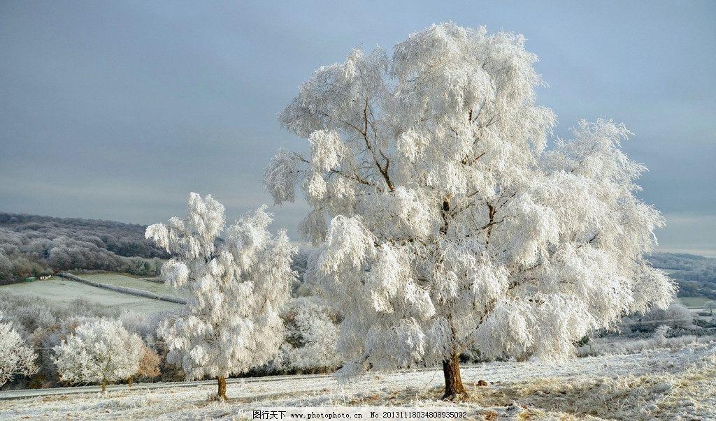 雪景图片,雪景图片素材下载 冬天 雪花 下雪 大树-图