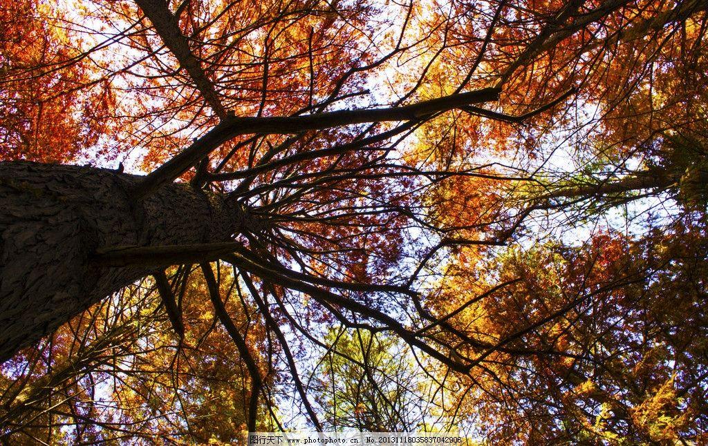 秋景 南京 中山植物园 树叶 秋天 树木树叶 生物世界 摄影 240dpi jp