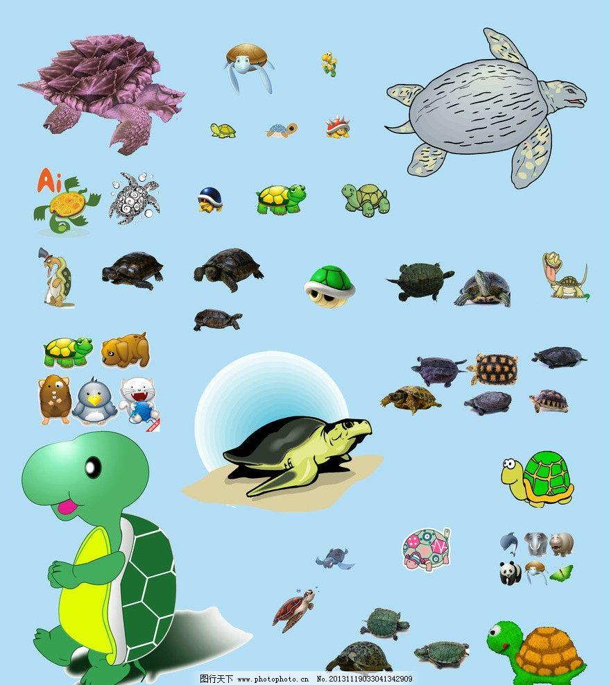 乌龟 乌龟素材下载 乌龟模板下载 龟 小乌龟 金钱龟 爬行动物 psd分层